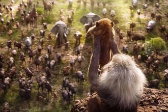 Кадр из анимационной ленты «Король Лев» (2019)