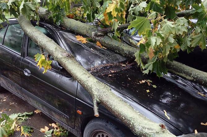 Поваленное ветром дерево на одной из улиц в Москве, 15 сентября 2017 года
