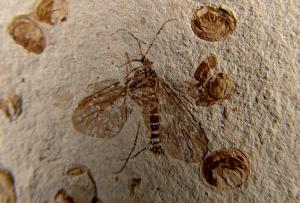 Ископаемые останки древней скорпионницы//Capital Normal University, Beijing
