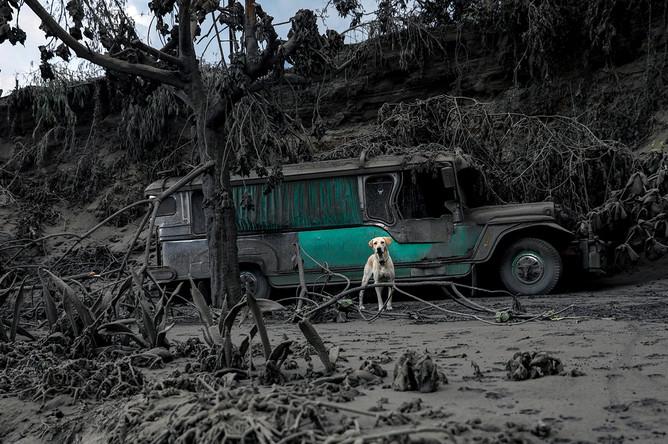 Последствия выброса пепла вулканом Таал на Филиппинах, 13 января 2020 года