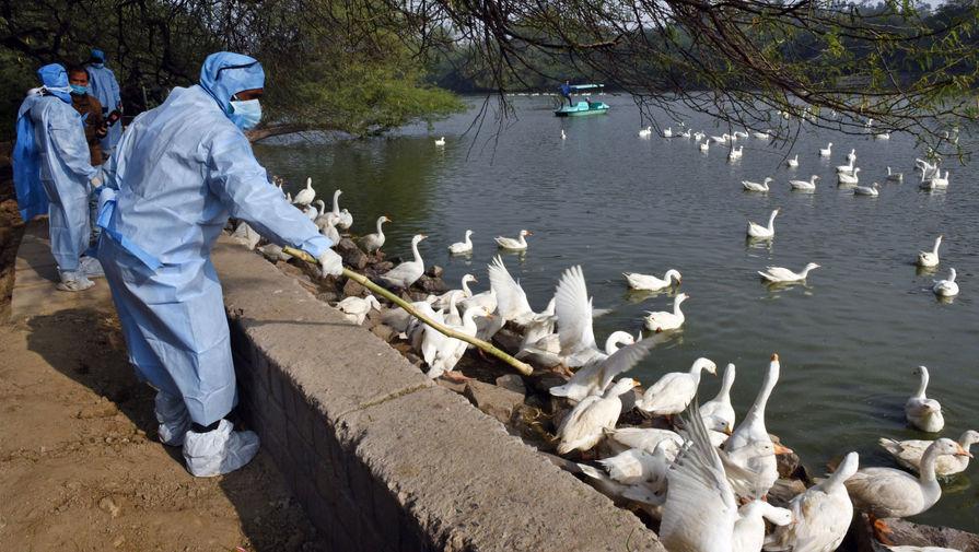 В китайской провинции выявили вспышку птичьего гриппа