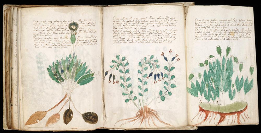 Ученые усомнились в расшифровке манускрипта Войнича