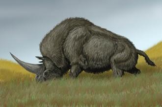 Древний носорог Elasmotherium sibiricum