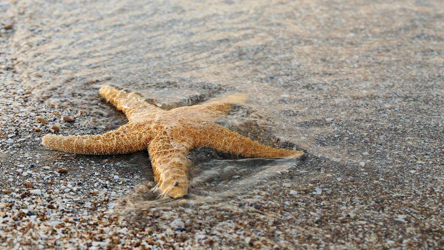 Ученый объяснил наличие больших ягодиц у морской звезды на фото