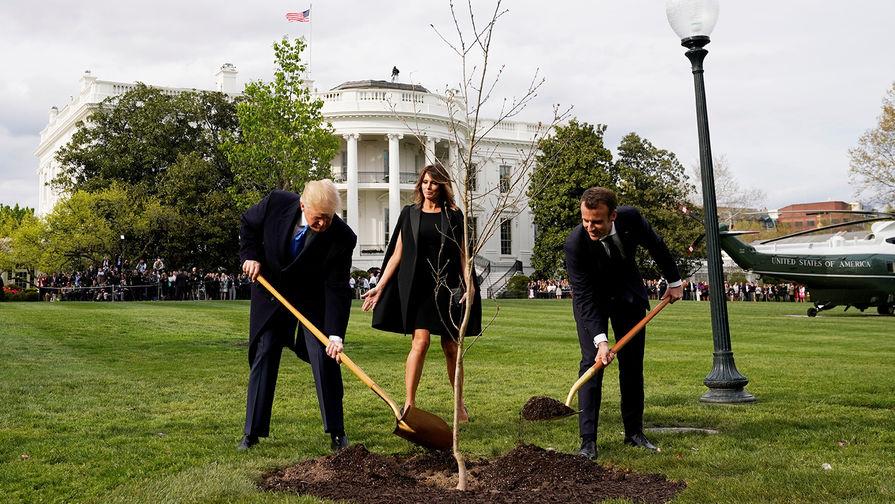 Макрон и Трамп сажают дуб у Белого дома, 23 апреля 2018