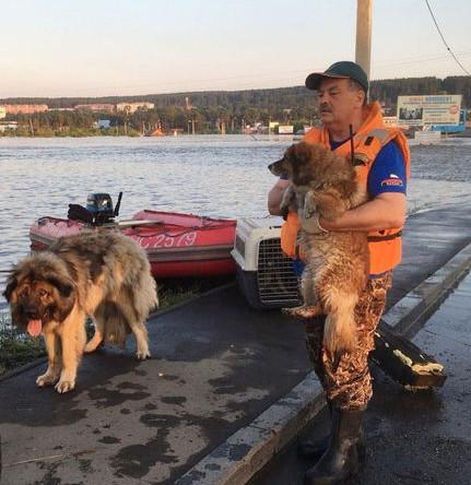 Сотрудник МЧС во время эвакуации собак из зоны паводка в городе Тулуне, 30 июня 2019 года