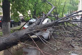 Последствия ураганного ветра в Москве, 21 апреля 2018 года