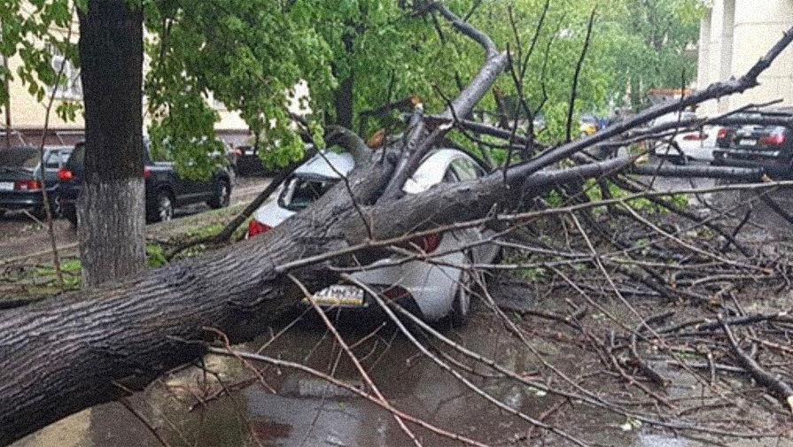 Собянин выразил соболезнования после гибели девочки при урагане в Москве