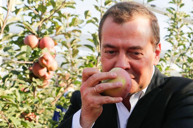 Председатель правительства России Дмитрий Медведев во время осмотра яблоневых садов в Ставропольском крае, 9 октября 2018 года