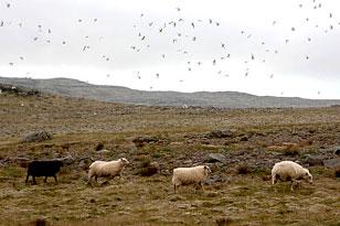 знакомства с девушками из исландии