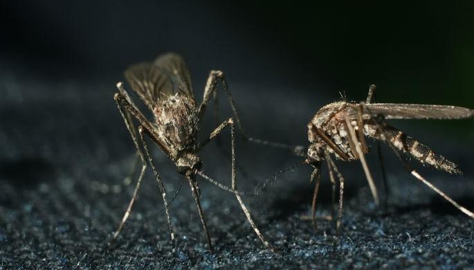 Слабость в ногах: как победить малярийных комаров
