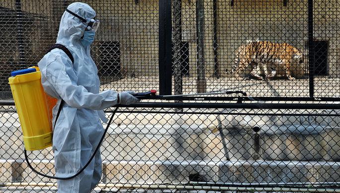 «Очень нелегко»: пандемия подкосила российские зоопарки