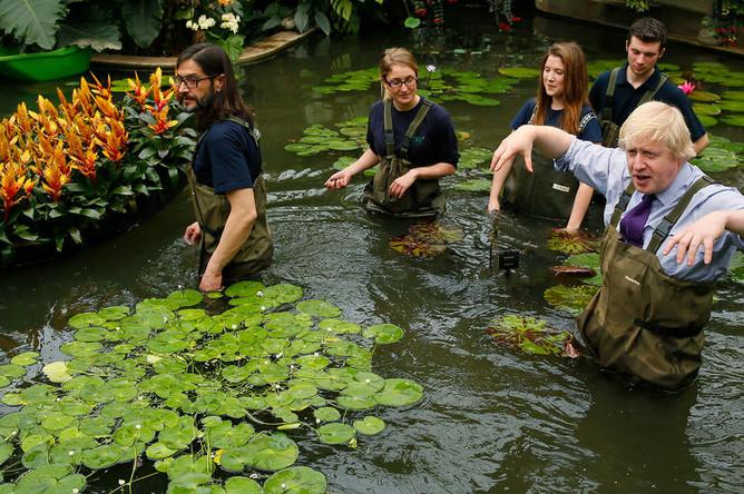 Борис Джонсон сажает кувшинки в Королевском ботаническом саду в Лондоне, 2015 год