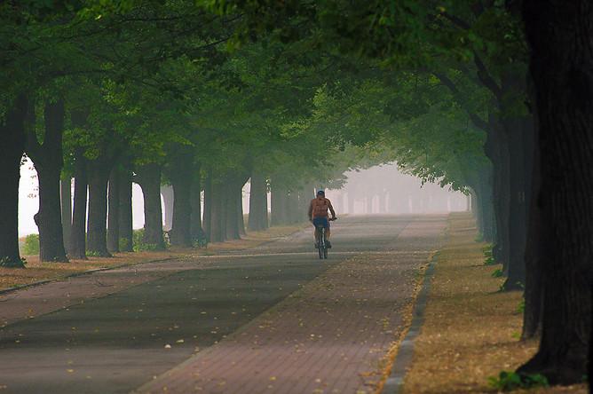В 2006 году в Лесной кодекс была введена новая категория защитных лесов – городские леса, то есть леса внутри городов. Их назначение такое же, как и у лесопарков- защита городской среды, помимо этого они участвуют в формировании ландшафтного дизайна городов.