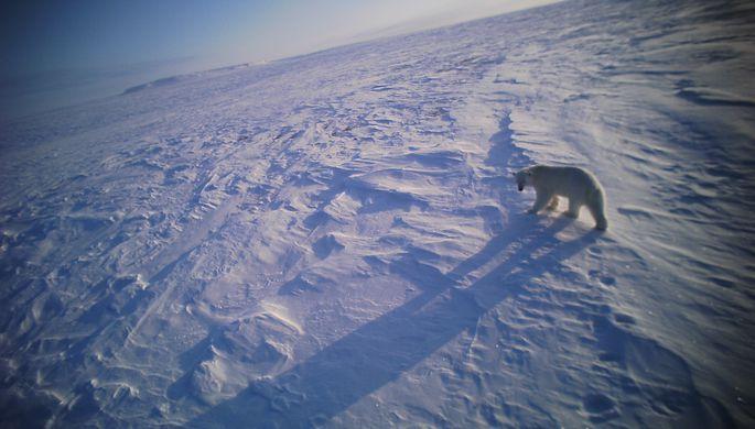 «Экспедиции направлены на создание мер защиты животных при работах в Арктике»