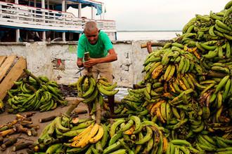 Ленин не накормит: что угрожает ценам на бананы в России