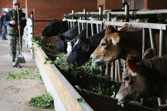 Сельское хозяйство требует немедленного выделения дополнительных денег из бюджета, решило правительство