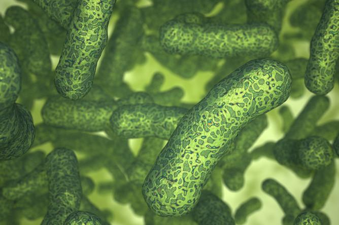 Ослабленные бактерии Listeria monocytogenes могут избирательно инфицировать раковые клетки