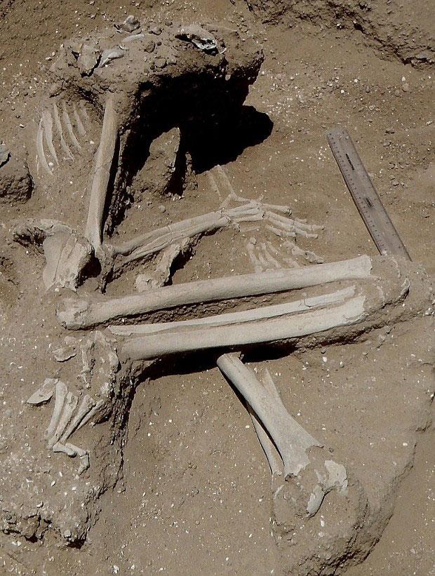 Скелет женщины, руки которой по-видимому были связаны перед смертью. Отмечены трещины коленных суставов и на левой ступне