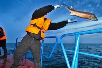 Пограничник отпускает в море рыбу во время рейда по борьбе с браконьерством осетровых в Каспийском море