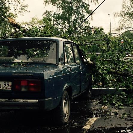 Не ставьте машину под деревья #дерево #ураган #машинупомял #неловкиймомент