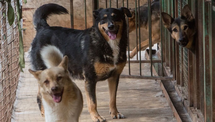 «Есть риск»: как COVID-19 повлиял на приюты для животных