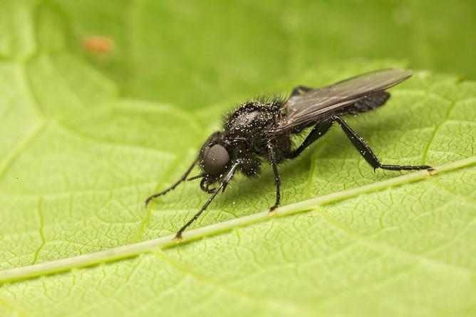 По мнению биологов, расплодившиеся в городе мухи не опасны для людей