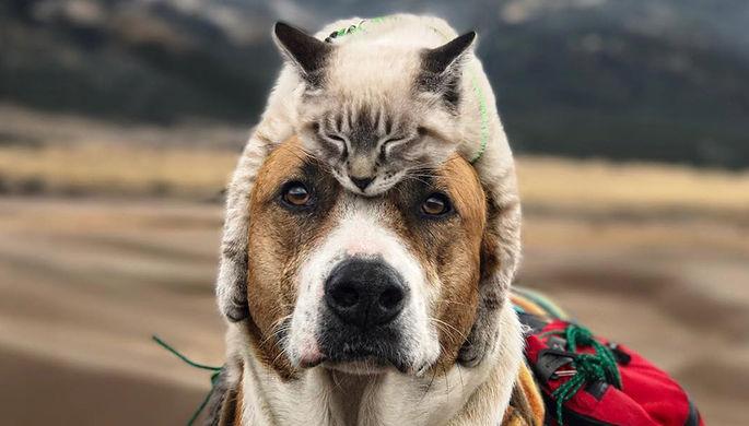 Москвичи раскрыли предпочтения при выборе кошек и собак