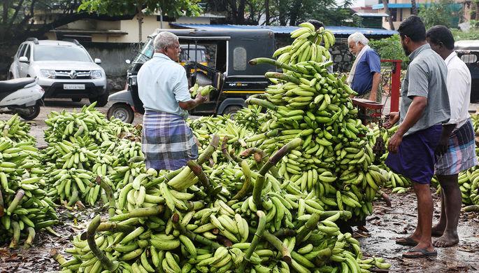 Виноват грибок: почему бананы могут исчезнуть из магазинов