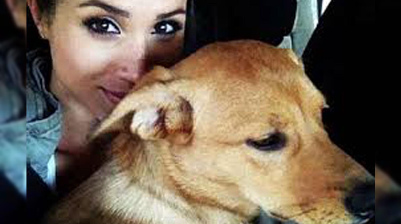 Меган Маркл променяла любимую собаку на принца Гарри - Газета.Ru ...