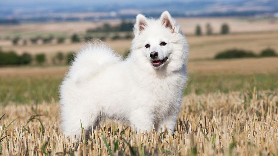 Названы самые популярные в России породы собак