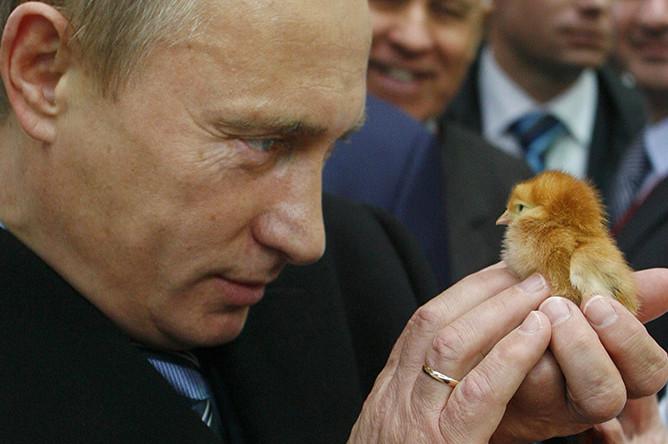 Владимир Путин во время посещения агропромышленной выставки «Золотая осень» на ВВЦ, 2008 год
