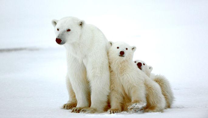 «Арктический гектар»: как удержать людей на севере России
