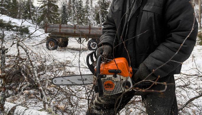 Дремучий лес: правительство разбирается с незаконной рубкой