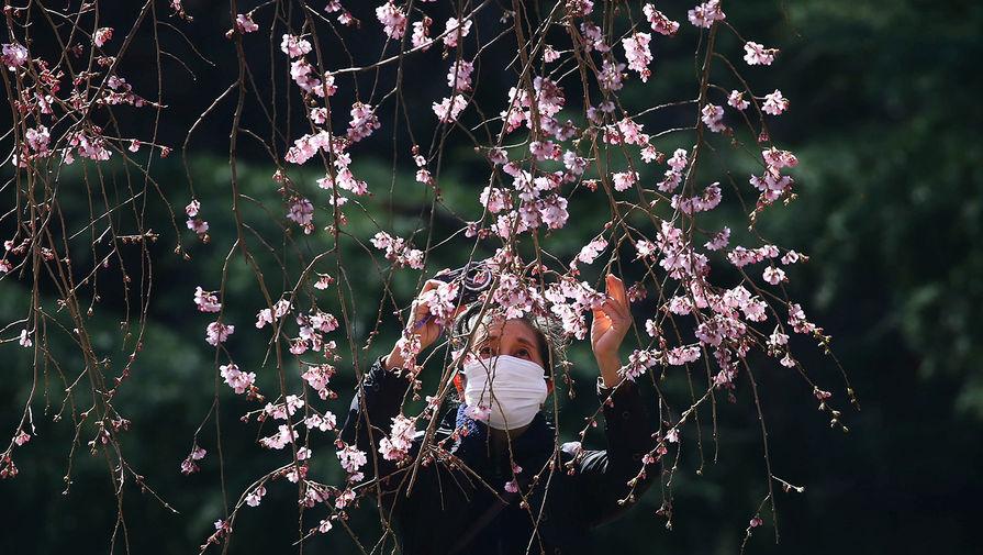 Посетительница в маске фотографирует цветение сакуры в парке Синдзюку-Геэн в Токио, 11 марта 2020 года