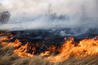 В России началась пора лесных пожаров
