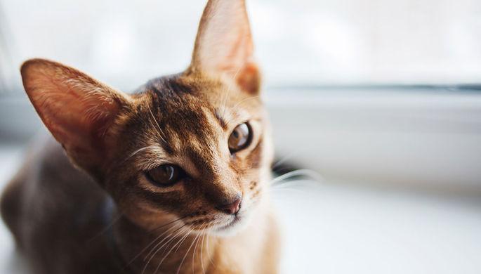 И не друг, и не враг: кошки не разобрались в нюансах человеческих отношений