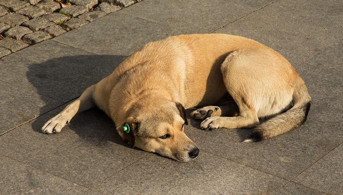 Правительству предложили чипировать домашних животных. Для чего это нужно