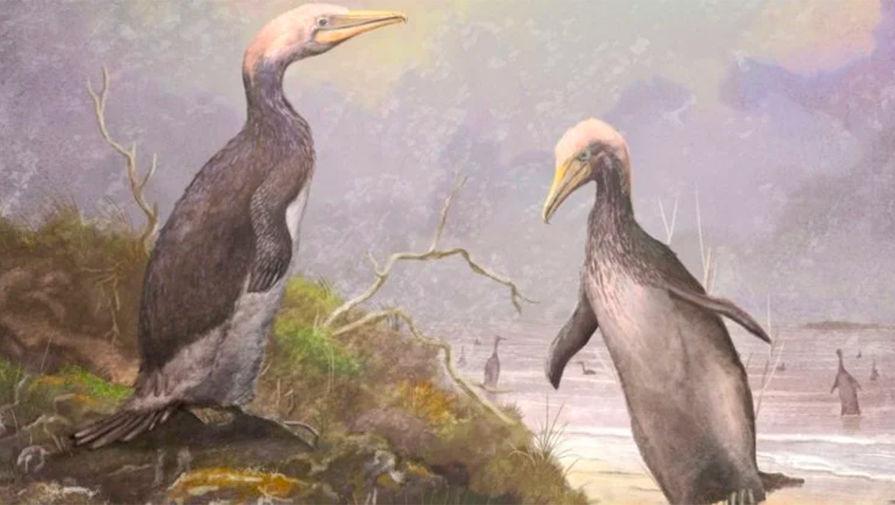 В Северном полушарии найдены двойники огромных пингвинов