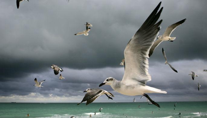 Птицы на пляже Майами-Бич (курортный город в штате Флорида). Майами и его окрестности уже давно...
