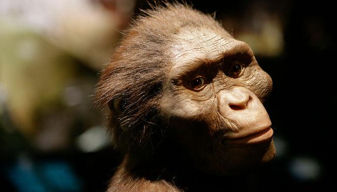 Тупее обезьяны: какой была австралопитек Люси