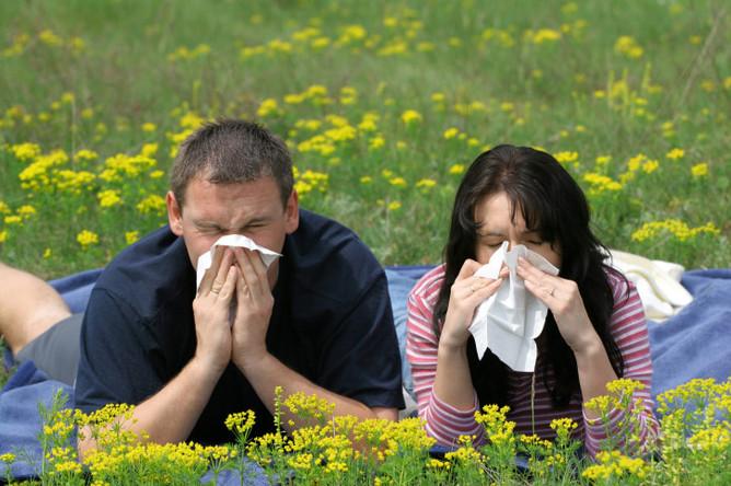 Главную опасность пыльца представляет для людей, страдающих аллергией и астмой