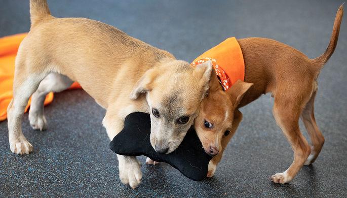 Ищут тепла: англичане разобрали животных из приютов