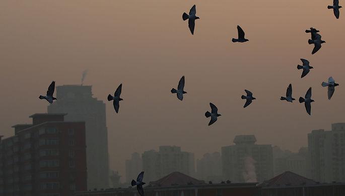 Пекин, 19 декабря 2016 года