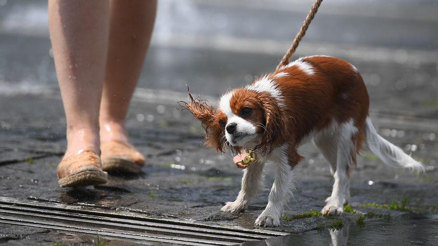 Тридцатиградусная жара снова одолеет Москву