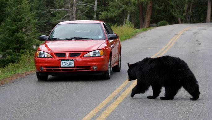 Йеллоустонский национальный парк в Вайоминге