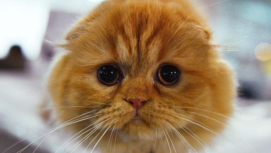 Медики обнаружили коронавирус у кошки в РФ