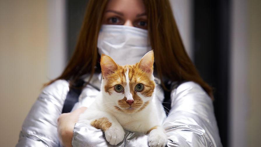 В Италии кошка заразилась британским штаммом коронавируса