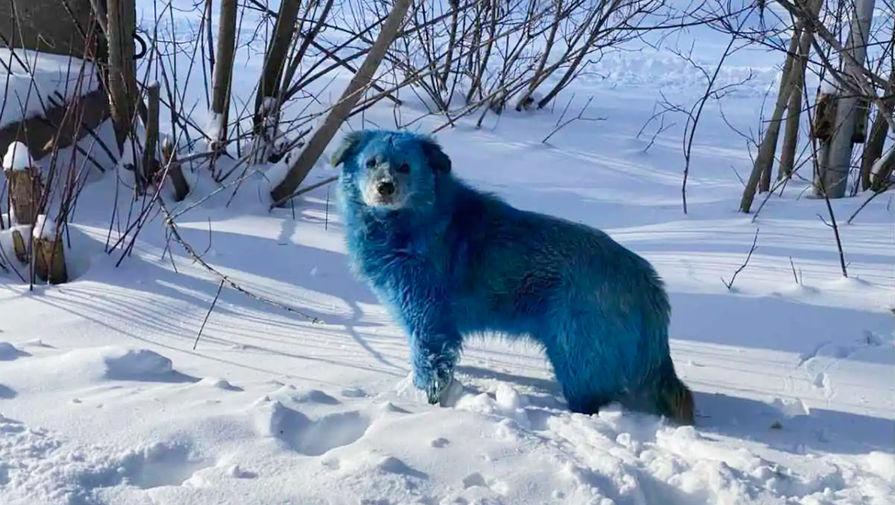 Голубая собака возле завода «Оргстекло» в городе Дзержинск Нижегородской области