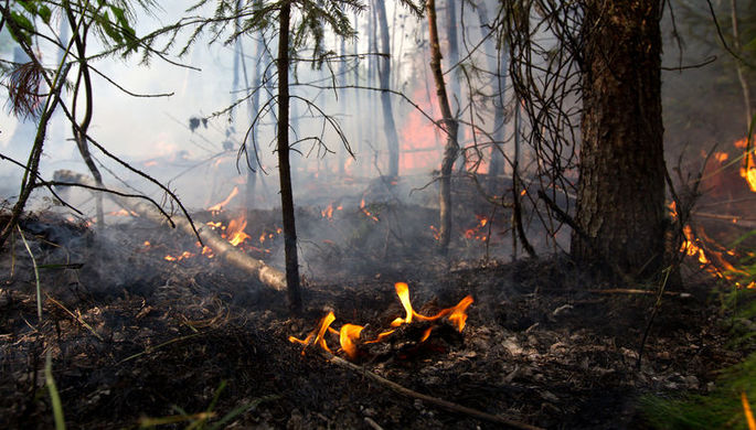 Идея-огонь: почему государство не хочет тушить лес